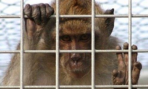 Lo sguardo degli animali e i loro sentimenti