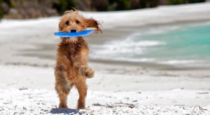 Baubeach, 7000 metri quadri di spiaggia per cani liberi e felici