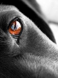 Facebook: stop ai video e alle foto di violenze sugli animali