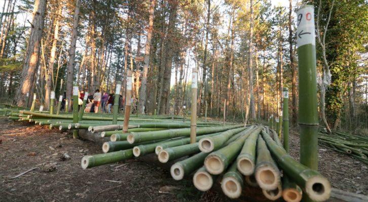 Canyaviva: costruzioni in bambù come alternativa sostenibile