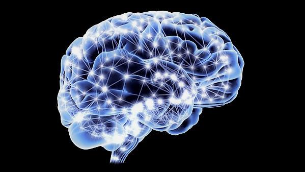 Il cervello umano è dotato di una 'rete fognaria' che drena i rifiuti