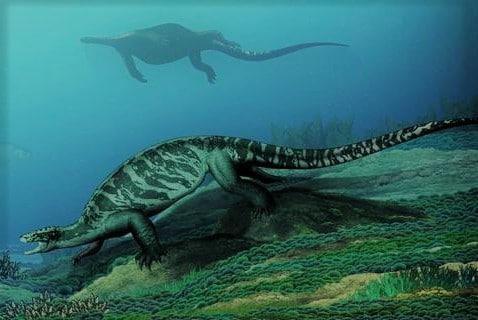 Tartaruga priva di guscio getta nuova luce sull'evoluzione di questi rettili
