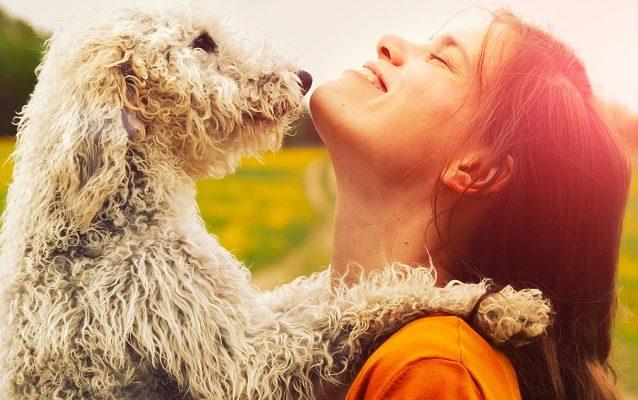 Quanto è grande il dolore per la perdita di un animale?