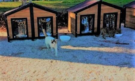 A Natale anche i gatti trovano casa